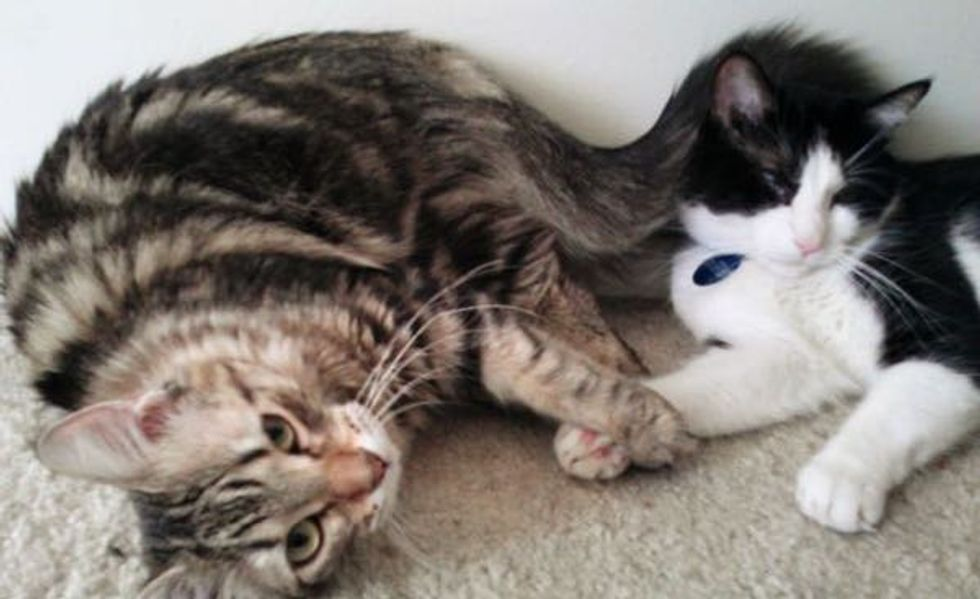 These Rescue Kitties Haven't Stopped Holding Paws and Snuggling Since They Met