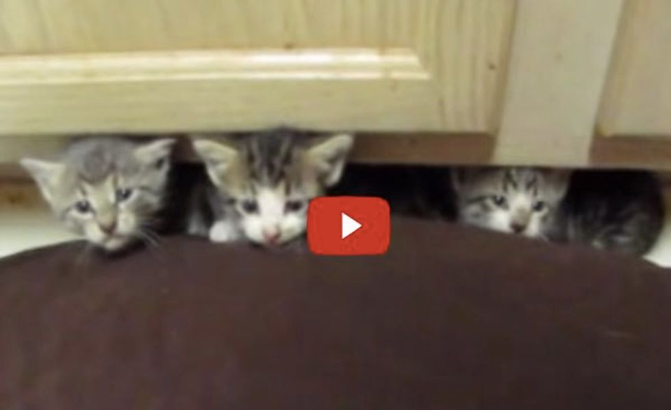 Tiny Feral Kittens from Fearsome to Happy. This is What Love Can Do