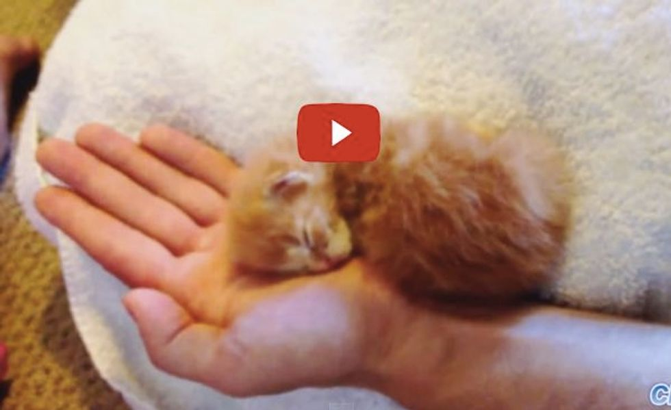Tiny Kittens Sleeping in Their Humans' Hands. So Much Cute!