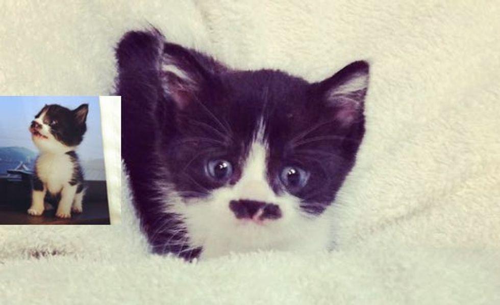 Little Mustachio Kitty Growing Up
