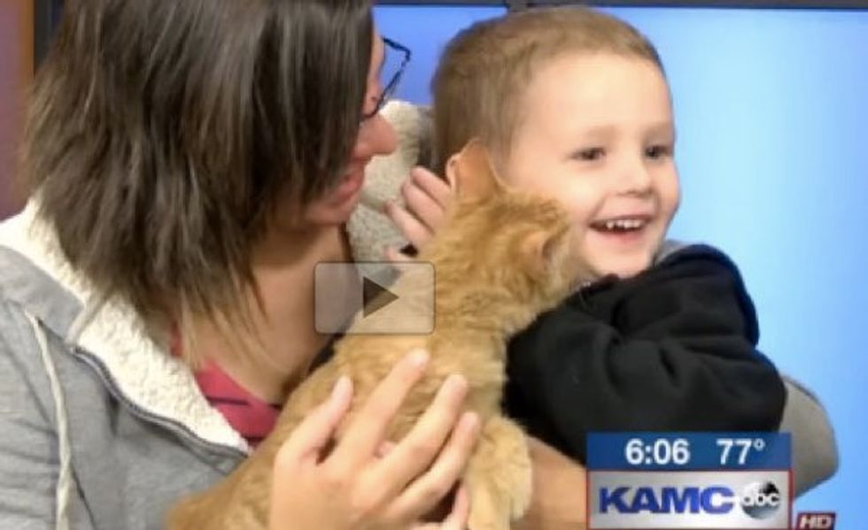 3 Year Old Boy Rescues Special Kitten Born without Eyes