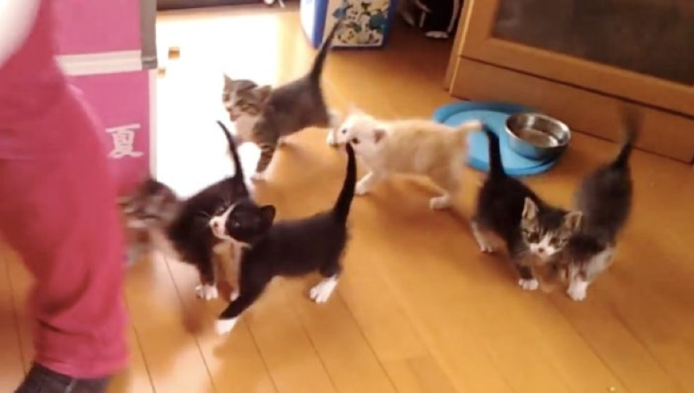 This is What It's Like to Feed 6 Hungry Kittens