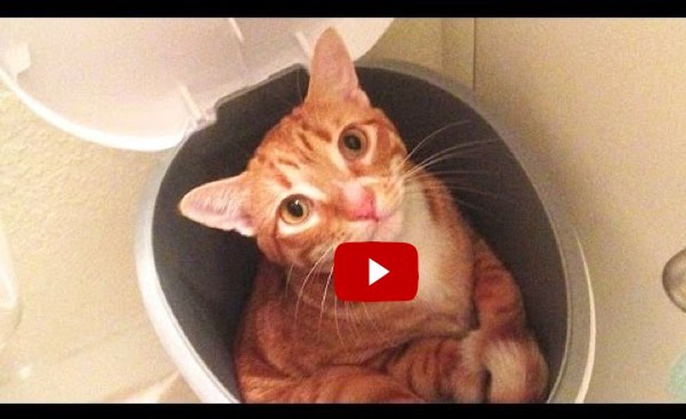 Cat Logic! Cole and Marmalade Tell Us How Cats See the World Around Them!