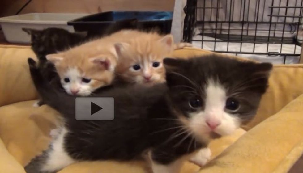 Fostering Brings so Much Joy. Watch These Tiny Kitties Grow!