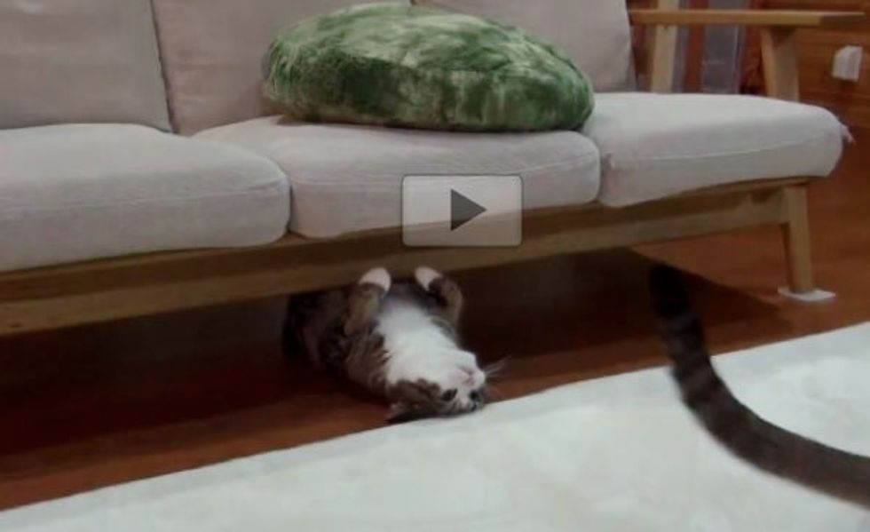 Maru Playing Chase and Pounce with Hana
