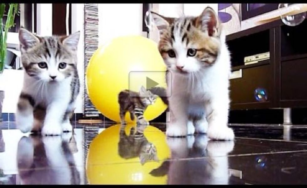 These Curious Kittens Investigating Bubbles