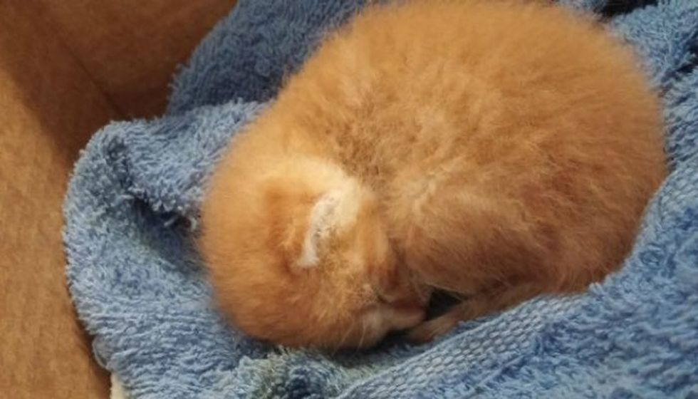 Tiny Baby Kitten Found in Back Yard Then and Now