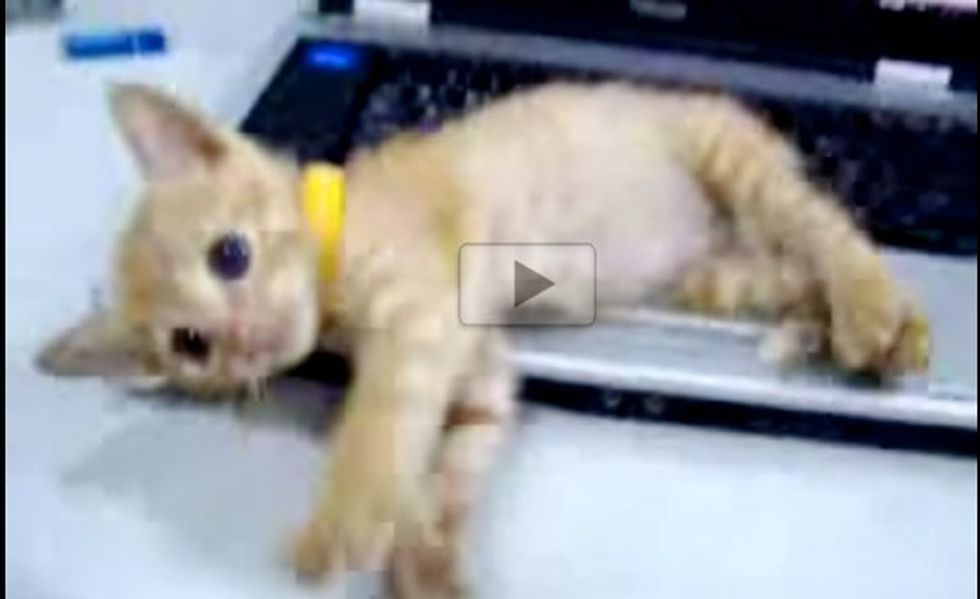 Kitty Loves Keyboard. This Happens, When His Human Tries to Use It