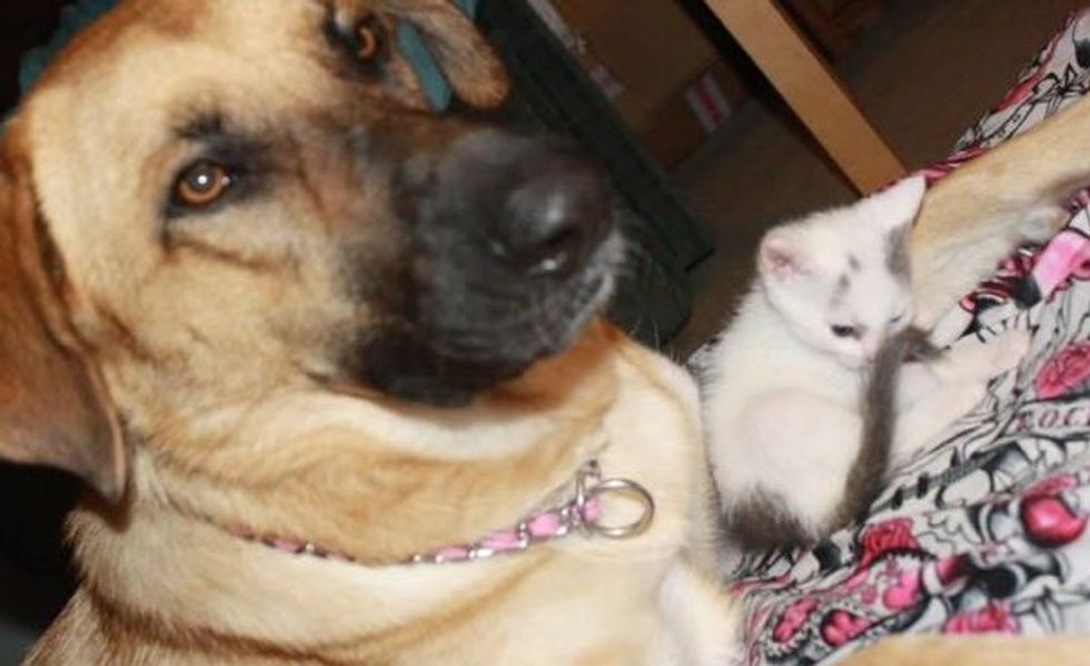 Rescue Kitten Found a New Protective Dad. These Photos Will Melt Hearts!