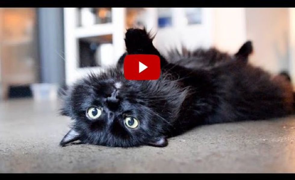 Life Hacks for Cats by Shorty and Kodi