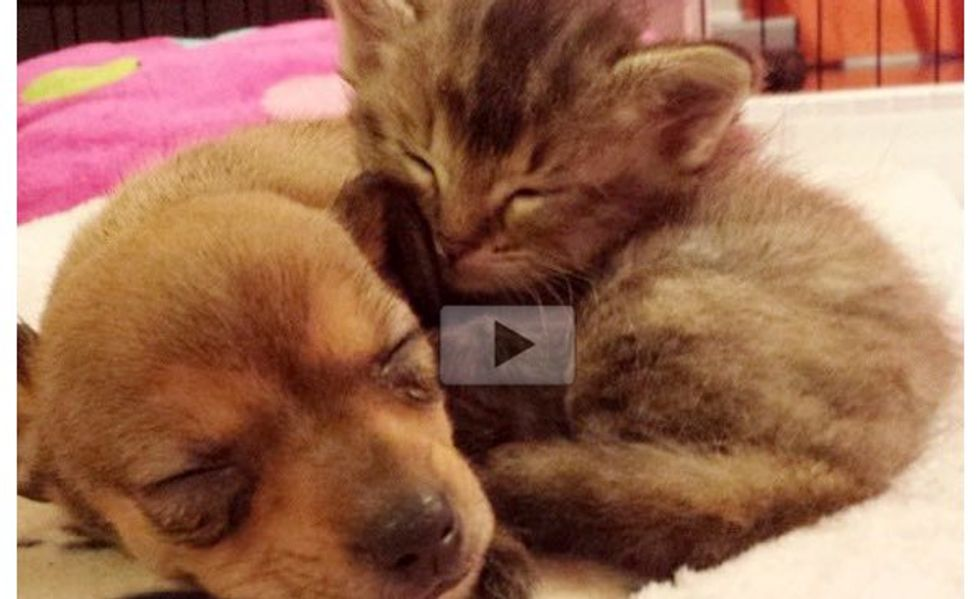 Orphan Kitten and Abandoned Puppy Adopt Each Other and Become Best Friends