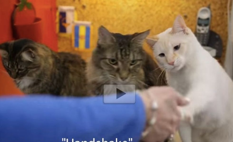 Woman With A Hearing Loss Taught Her Deaf Cat Sign Language