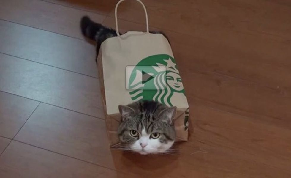 Maru Stuffs Himself in Paper Bag, Sometimes He Wears It