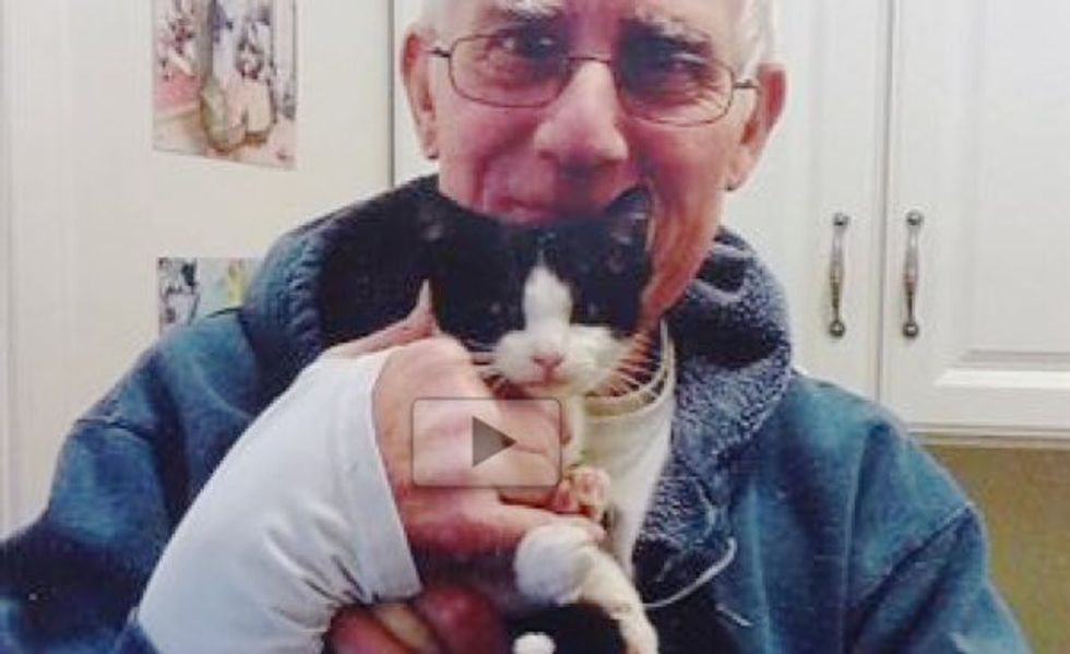 Kitten Rescued from a Mailbox Found Home with a Retired Mailman