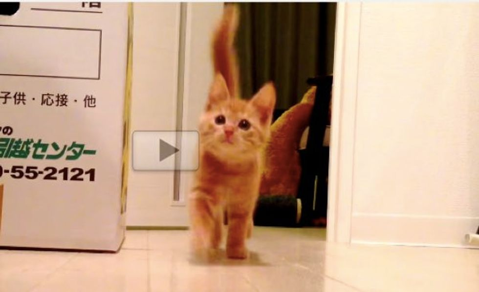 This is Why You Can Never Be Fast Enough When Feeding a Kitten