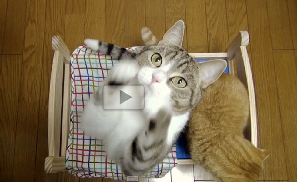 Kitties Get a Cat-sized Bed. This is How They React!