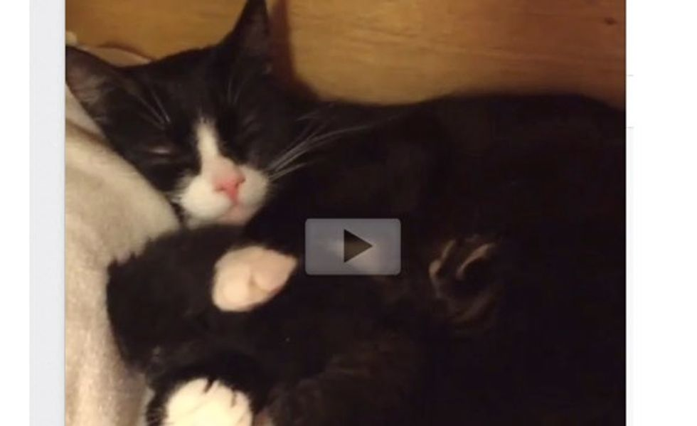 This is How Cat Mama Feels When She and Her Kittens Find a Foster Home