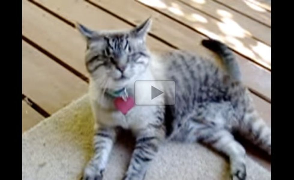 Gus the Blind Cat Bringing His Human Mom 'Gifts'