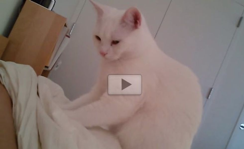 This is Perhaps the Sweetest Kitty Wake-up Call