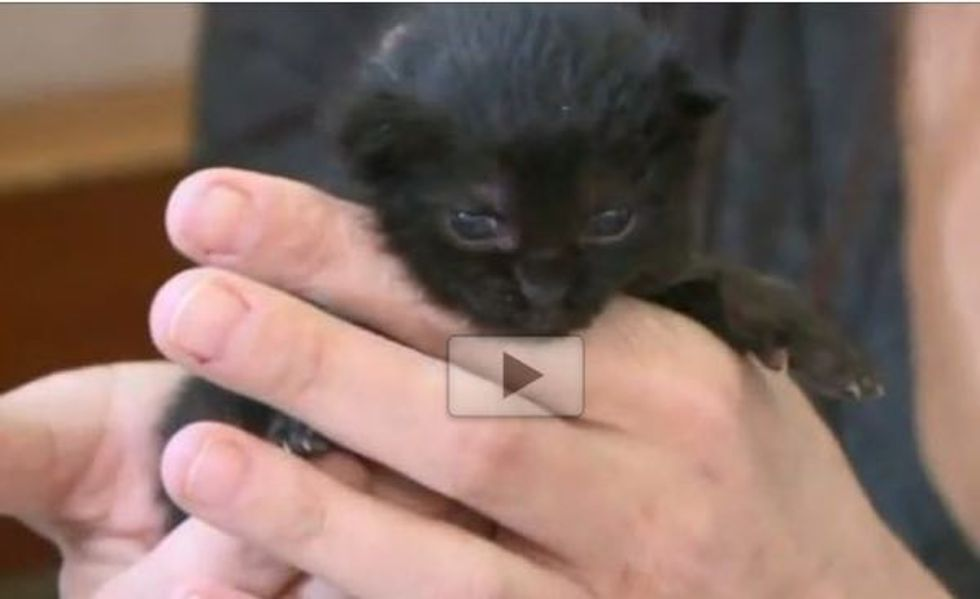 Two Orphan Kittens Taken in by Chihuahua Caring for Them Like Her Own