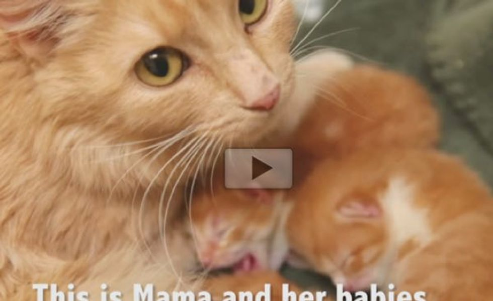 Ginger Cat Mama Gave Birth at Mall Loading Dock Rescued with Her Babies