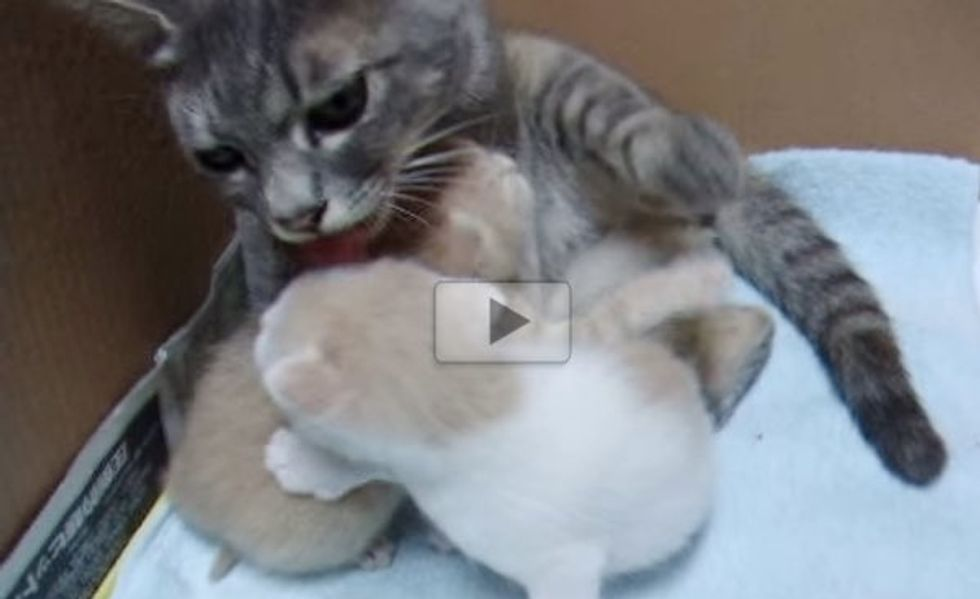 Stray Cat Came to a Family and Brought Two Little Furry Surprises