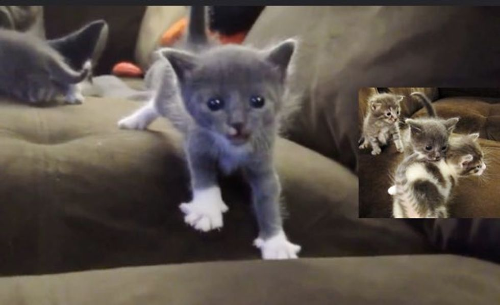 Derby the Motherless Kitten Adopted by a Furry Family