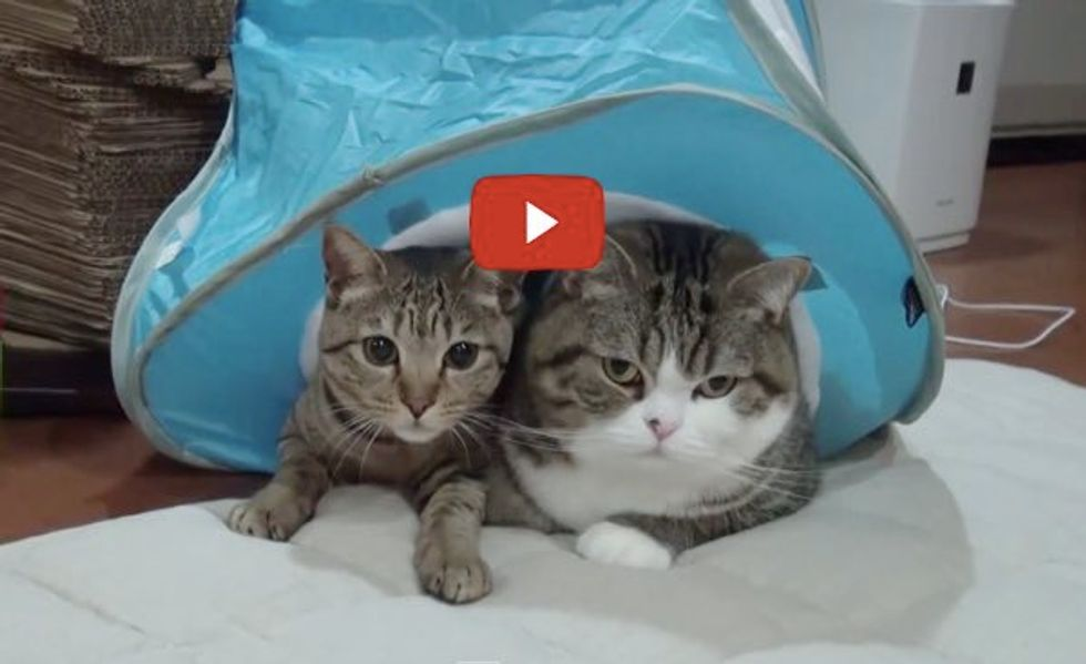 Hana Turns Two! Maru's Been Quite a Big Brother!