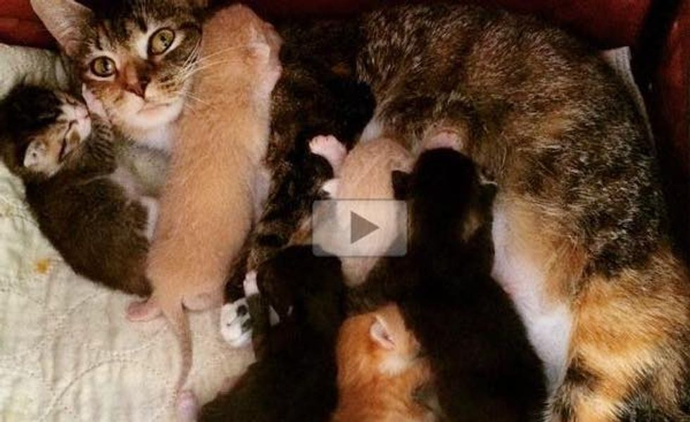 Stray Cat Looked for Shelter During Ice Storm Then Gave Birth to Seven Very Hungry Kittens