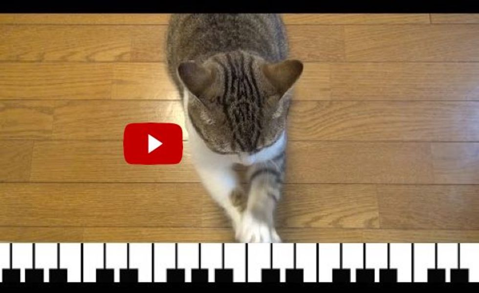 This Cat Can Play the Piano Even Without the Keys! It's Brilliant!