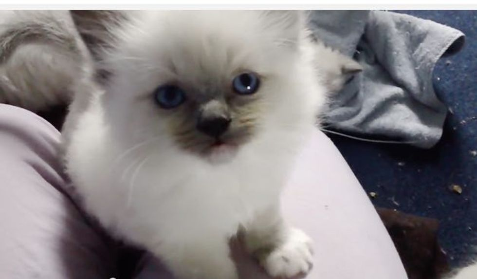 This Little Kitten is a Squeaker! My Heart Melts When I Hear Those Squeaks!
