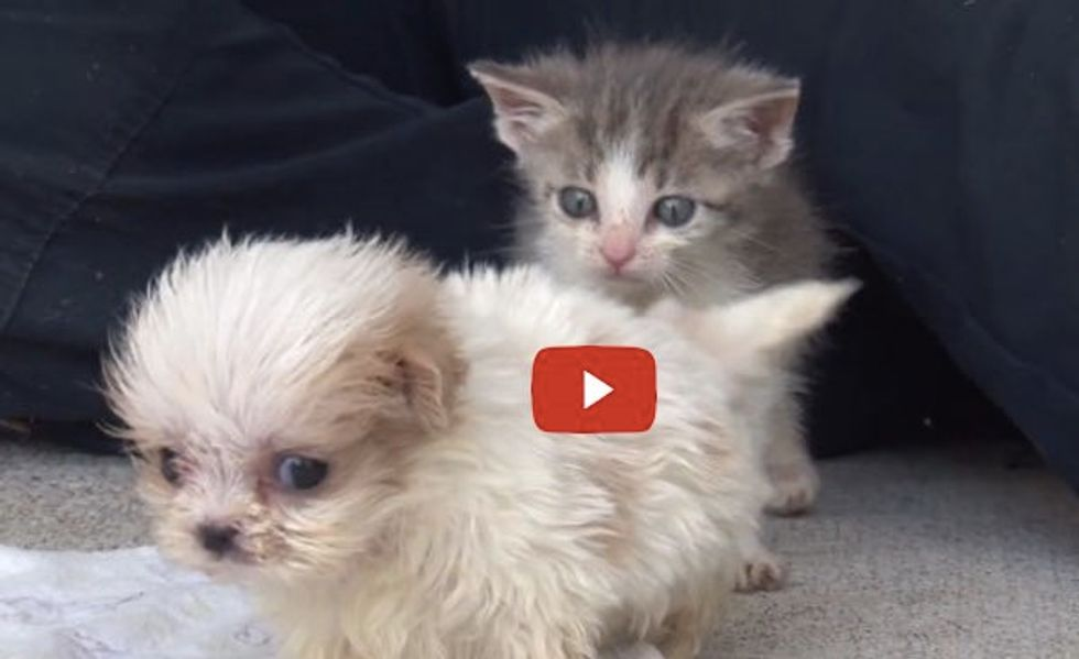 See This Special Bond! Rescue Kitten and Puppy Find Each Other