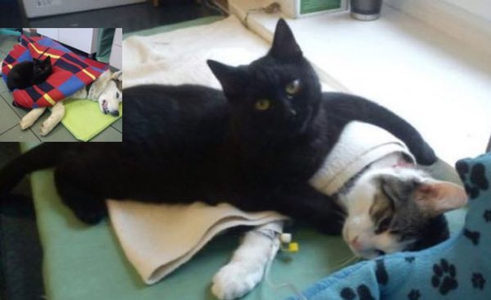Rescue Cat Becomes Nurse at Shelter Purring Animal Patients Back to Health