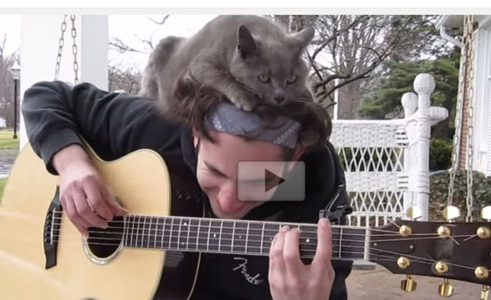Cat Gets the Best Spot While Her Human Plays the Guitar