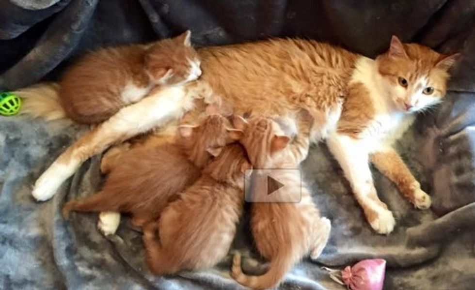 Stowaway Cats Saved by Sailors Find Foster Care in the US