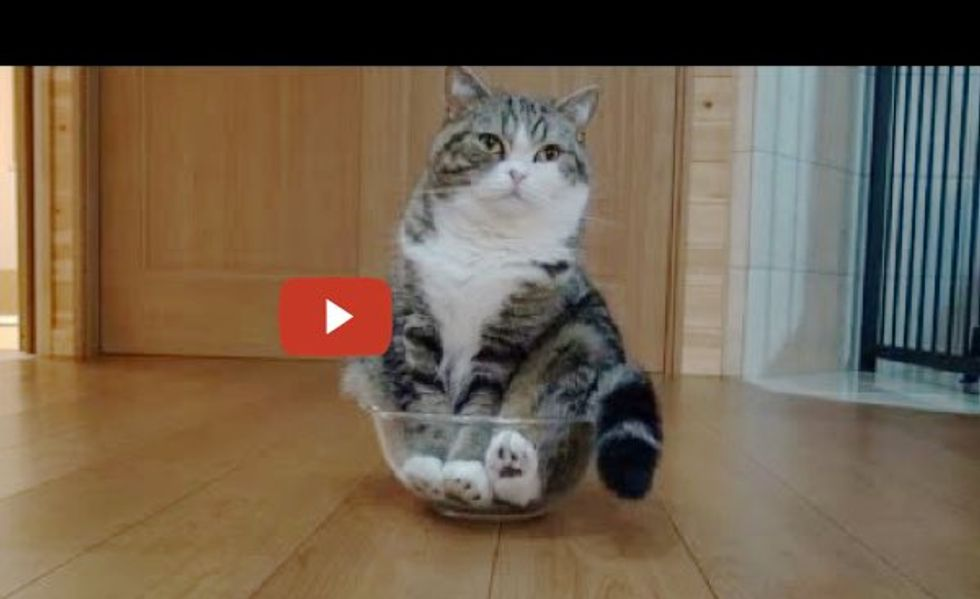 When Maru Discovers a Mixing Bowl...