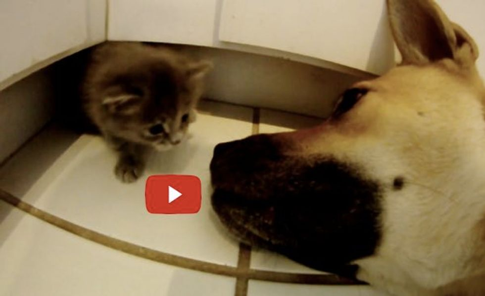 Phoenix the Kitten Finds a New Mom, Charlie the Dog! Both are Rescues!