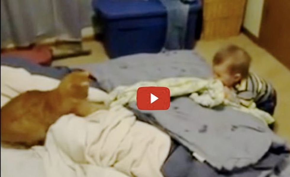 Kitty is Having Fun Playing with His Little Human. Baby Can't Stop Laughing!