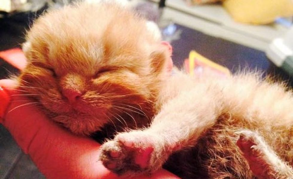 Miracle Kitten Rescued from Rubble After a Fire