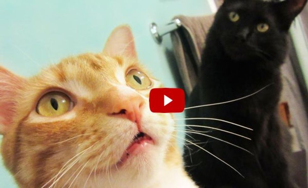 Here are Top 10 Cat Superpowers! Aren't Cats Super?