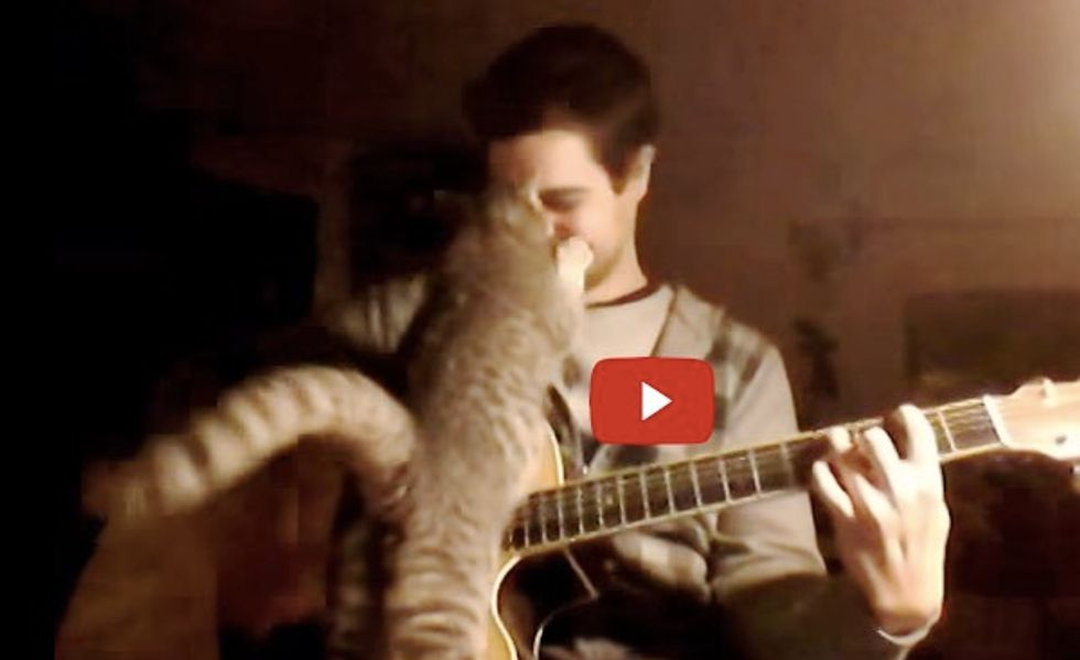 This Cat Wants to Chime in When Her Human Plays a Song