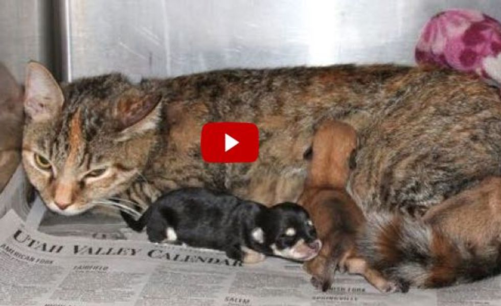 Kit the Super Cat Mom Helps Abandoned Newborn Puppies. But That's not All!