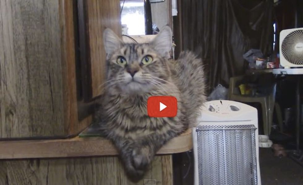 Lily the Cat Answers Her Human's Questions. The Last Question is Her Favorite!