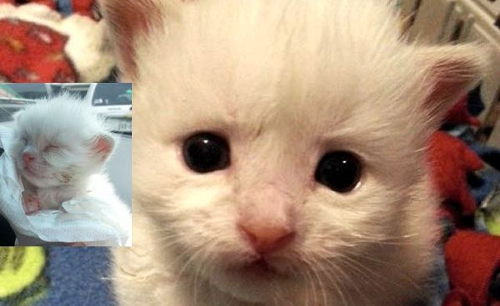 This Tiny Kitten is a Little Fighter Who Refuses to Give Up! Meet Stitch!