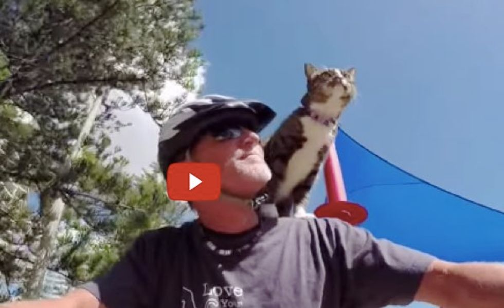 This Kitty Loves to Take Bike Rides with Her Human Dad! What a Cool Cat!