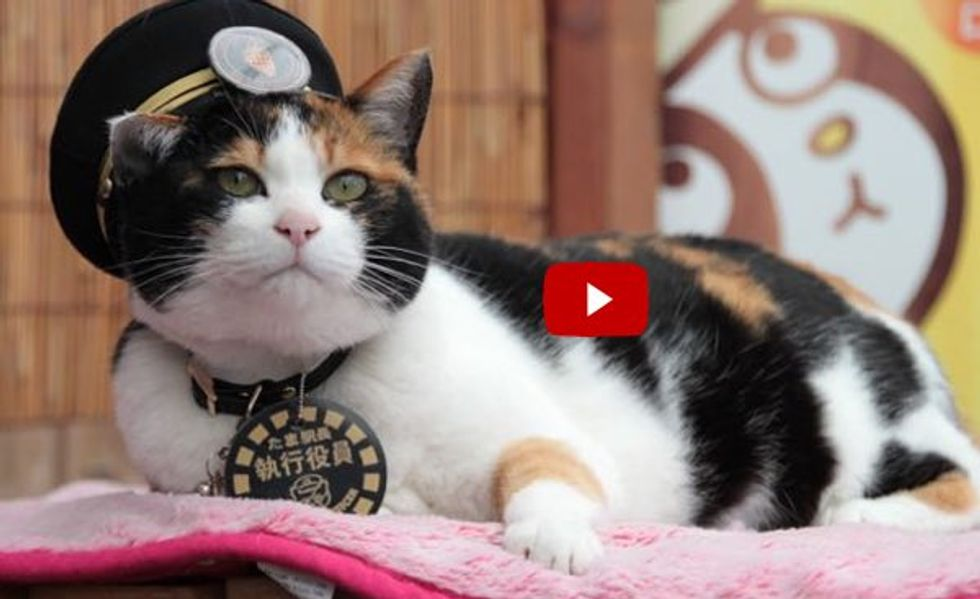 Station Master Tama, Rescue Cat that Saved a Train Station, Turns 16 Today!