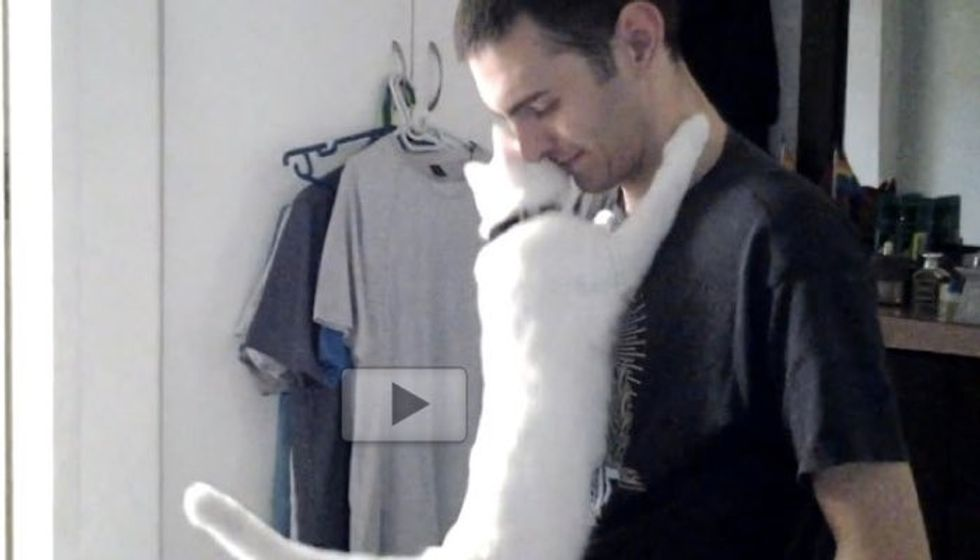 This Cat is So Affectionate. He Cant' Stop Hugging His Human