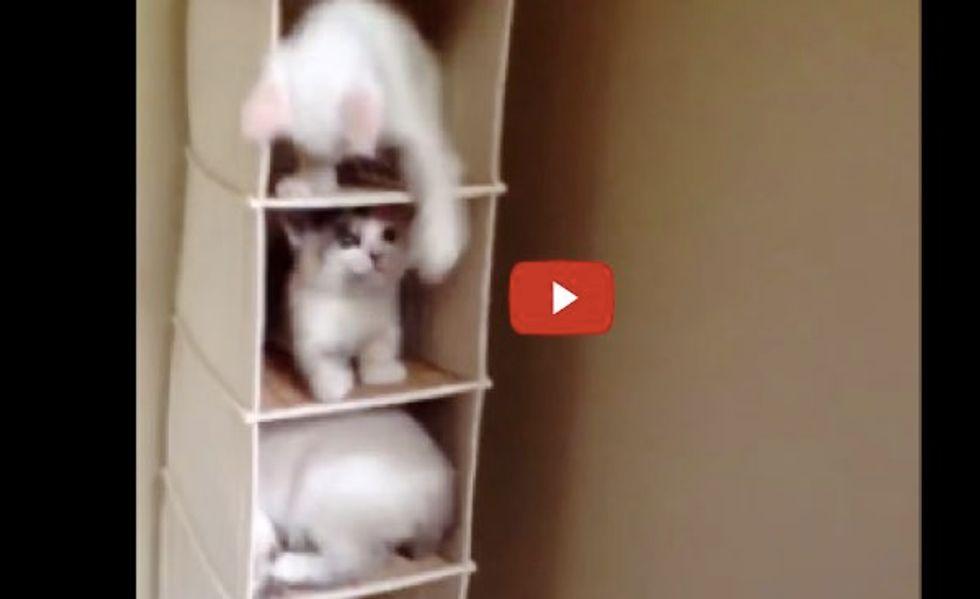 These Kitties Turn Hanging Organizer into Cat Kondo! This is Why We Need More Kitties!