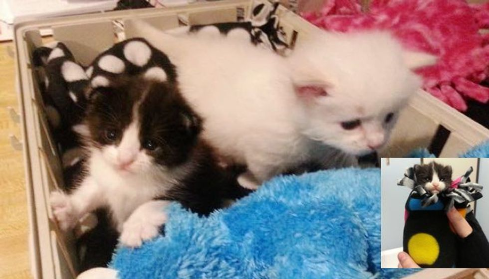 Tiny Rescue Kitten Adopts a Tinier Orphan Kitten. It's the Purrfect Pair!