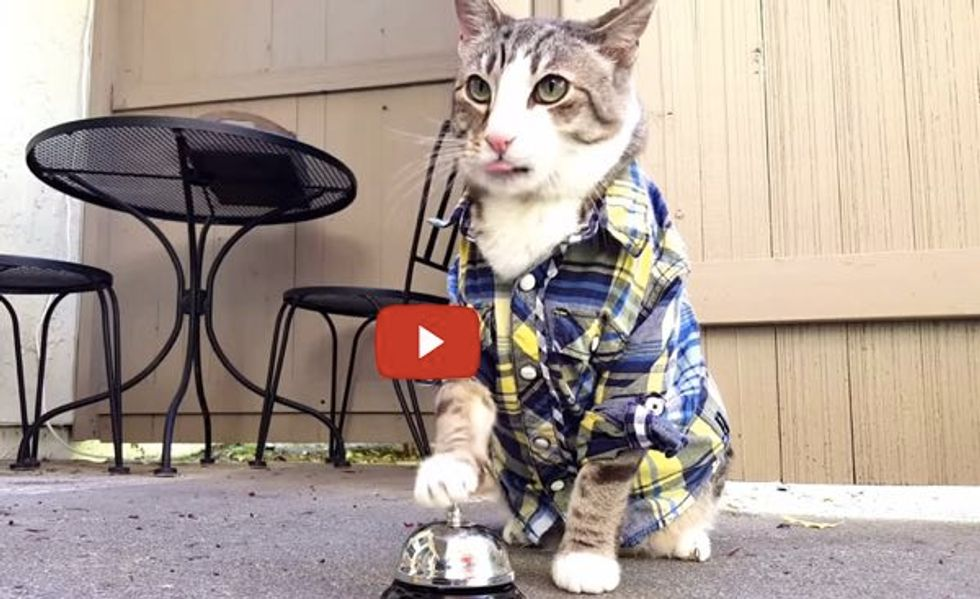 This Handsome Cat Has Trained His Human to Serve Him Treats with a Bell! The Ending is Hilarious!